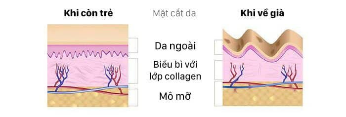 Collagen Advance tuyp 1,2,3 bổ sung Collagen, làm đẹp da