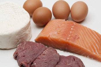 egg-meal