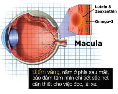 Thuốc bổ mắt cho người lớn trên 50t