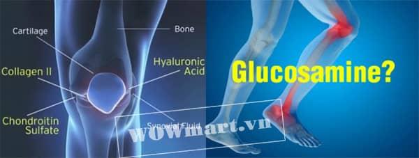 Công dụng của thuốc Glucosamine hcl 1500mg 400 viên