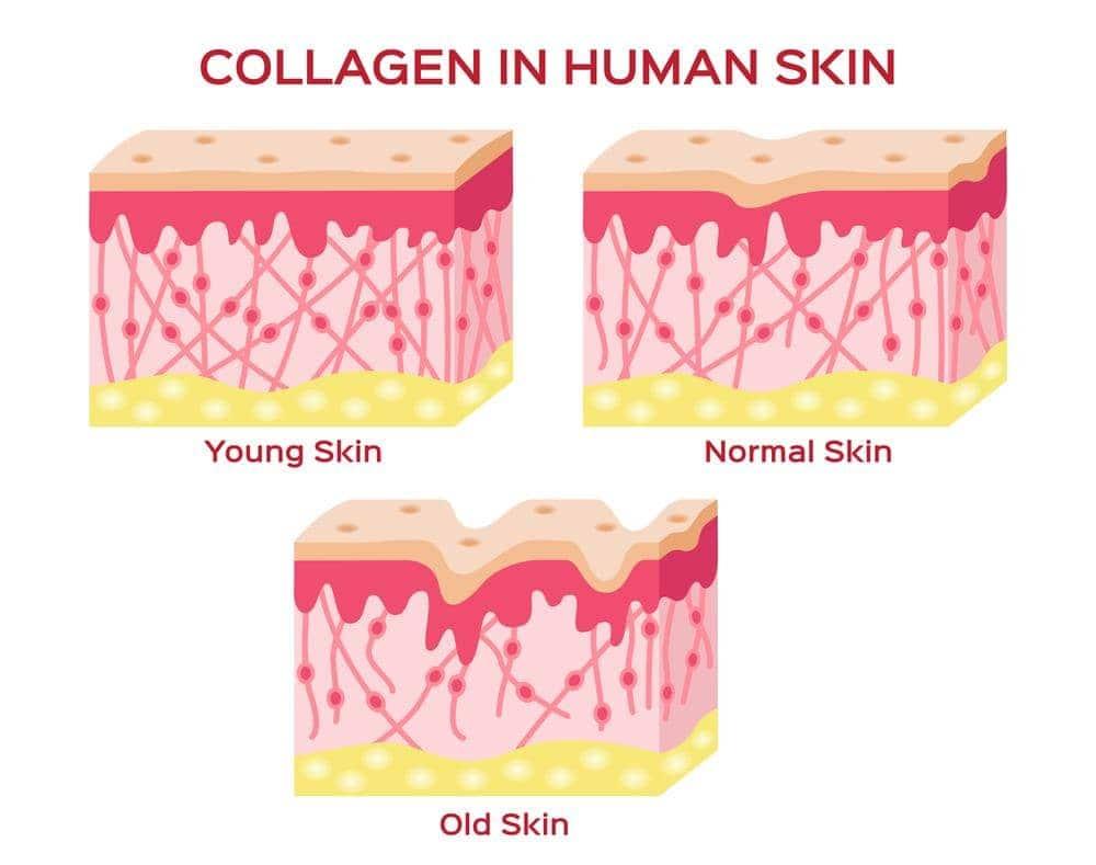 Collagen Caruso's dạng nước 500ml