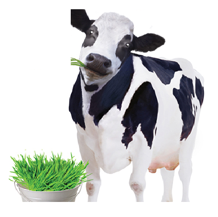 Sữa bò non dạng viên của Úc cho trẻ trên 1 tuổi Healthy Care Super Colostrum 400mg 200 viên
