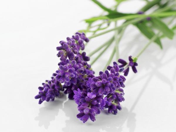 Nước rửa phụ khoa dùng ban đêm Summer's Eve Lavender Night Time 354ml