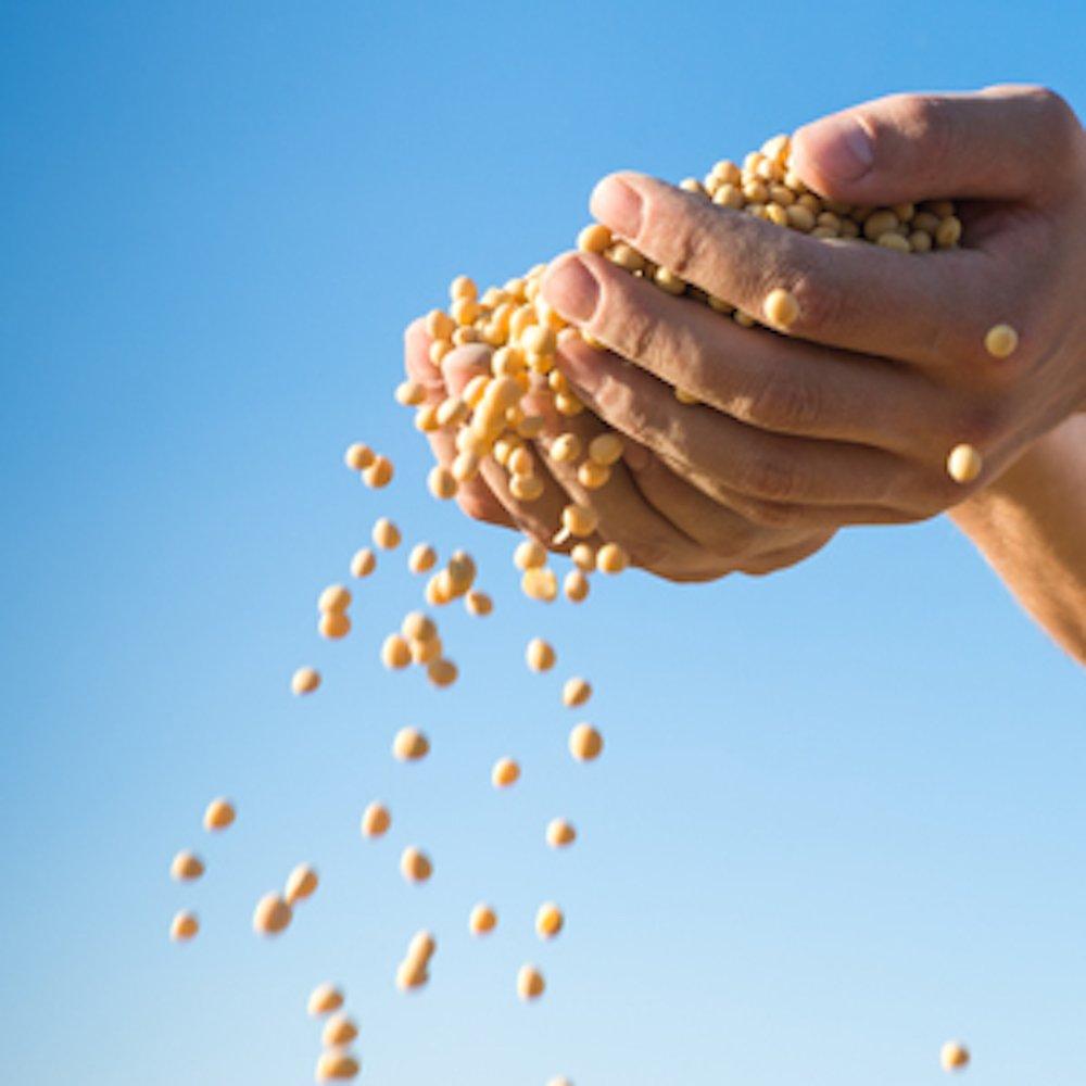 Viên bổ trợ chức năng gan mầm đậu nành Swisse Lecithin 1200mg 300 viên